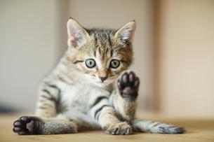 子猫の写真素材 [FYI04610790]