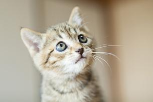 子猫の写真素材 [FYI04610797]