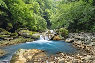 栃木県 スッカン沢の流れの写真素材 [FYI04611294]