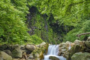 栃木県 スッカン沢の流れの写真素材 [FYI04611299]
