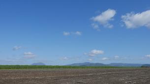 青空と野菜畑の写真素材 [FYI04611300]