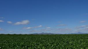 青空と野菜畑の写真素材 [FYI04611340]