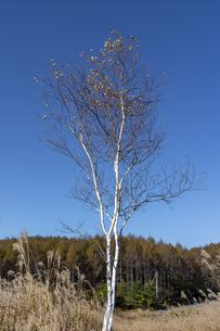 秋の霧ヶ峰湿原植物群落の写真素材 [FYI04611447]