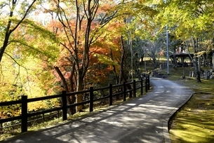 篠山,宝橋山,高蔵寺境内の紅葉の写真素材 [FYI04611573]