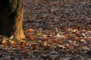落葉の写真素材 [FYI04611603]