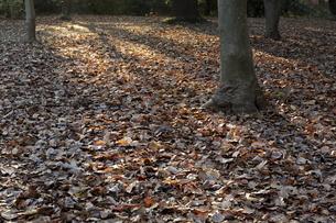 落葉の写真素材 [FYI04611604]