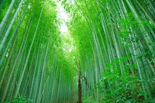 竹林風景の写真素材 [FYI04611724]