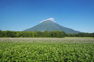 羊蹄山とジャガイモの花の写真素材 [FYI04611924]