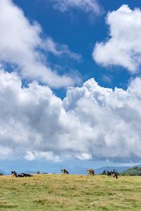 美ヶ原高原牧場の写真素材 [FYI04612361]