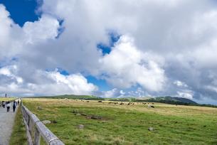 美ヶ原高原牧場の写真素材 [FYI04612366]