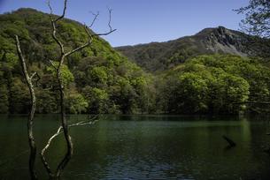 白神山地 新緑が芽吹く鶏頭場の池の写真素材 [FYI04612420]