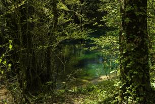 白神山地 新緑が芽吹く沸壺の池の写真素材 [FYI04612427]