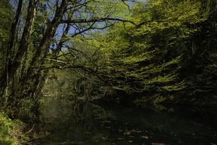 白神山地 新緑が芽吹く長池の写真素材 [FYI04612454]