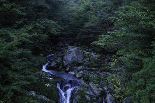 屋久島 白谷雲水峡の渓流の写真素材 [FYI04613411]