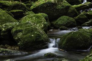 屋久島 白谷雲水峡の渓流の写真素材 [FYI04613414]