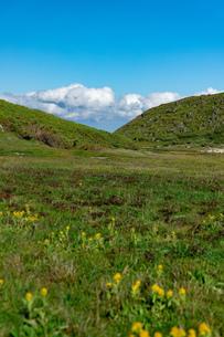 北海道 黒岳山頂周辺の夏の風景の写真素材 [FYI04613514]