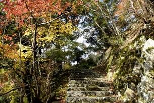 瑞石山,紅葉の永源寺参道の写真素材 [FYI04613831]