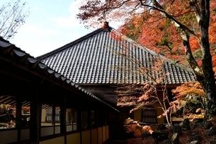 瑞石山,永源寺法堂ともみじの紅葉の写真素材 [FYI04613846]