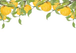 水彩の柚子の木フレームのイラスト素材 [FYI04613910]