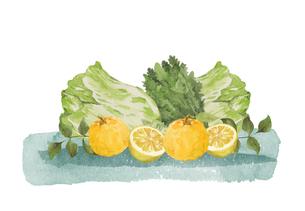 柚子と野菜の水彩画のイラスト素材 [FYI04613911]