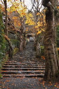 11月 紅葉の寂光院-京都大原の秋-の写真素材 [FYI04614006]