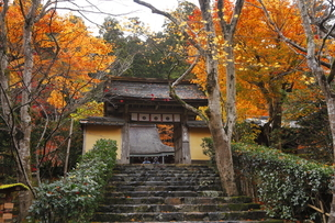 11月 紅葉の寂光院-京都大原の秋-の写真素材 [FYI04614007]