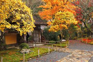 11月 紅葉の寂光院-京都大原の秋-の写真素材 [FYI04614018]