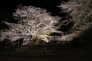 弘前城 東内門の夜桜の写真素材 [FYI04614518]