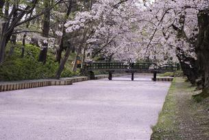 弘前城 外濠の亀甲橋の桜と花筏の写真素材 [FYI04615121]