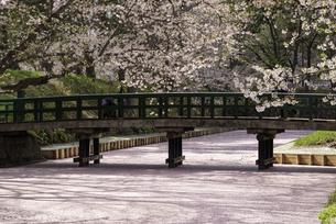 弘前城 外濠の亀甲橋の桜と花筏の写真素材 [FYI04615134]