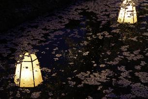 弘前城 外濠 水面に映りこむ提灯と花筏の写真素材 [FYI04615156]