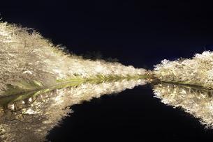 弘前城 西濠の桜のトンネルと水面に映りこむ夜桜の写真素材 [FYI04615166]