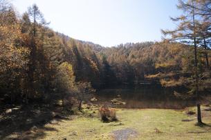 御射鹿池の紅葉の写真素材 [FYI04620052]