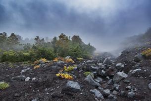 富士山 宝永山の景色の写真素材 [FYI04620232]