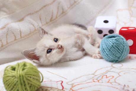 ソファの上で微睡む子猫の写真素材 [FYI04620335]