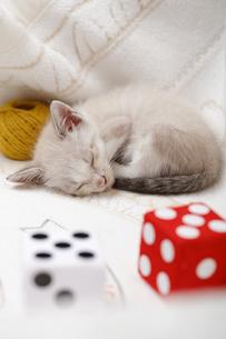 ソファで眠る子猫の写真素材 [FYI04620339]