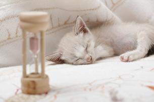 砂時計の傍で眠る子猫の写真素材 [FYI04620345]