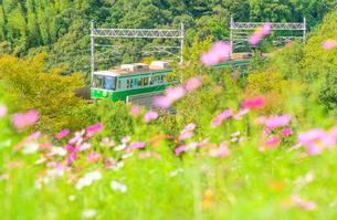関西の鉄道 神戸市営地下鉄とコスモスの丘の写真素材 [FYI04620519]