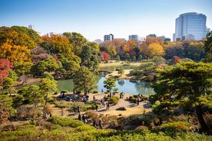 【日本】東京都文京区、秋の紅葉に色づく六義園の風景の写真素材 [FYI04620610]