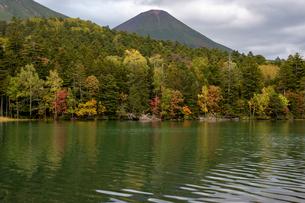 秋の木々を映す湖面 オンネトー湖の写真素材 [FYI04621008]