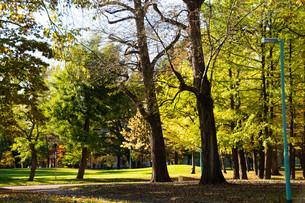 夕暮れの秋の公園の写真素材 [FYI04621014]