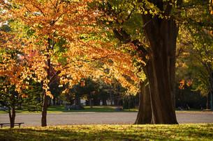 夕暮れの秋の公園の写真素材 [FYI04621015]
