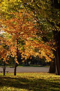 夕暮れの秋の公園の写真素材 [FYI04621016]