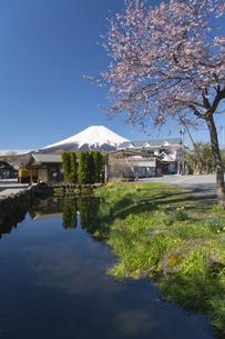春の忍野八海の写真素材 [FYI04621503]