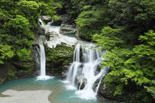 夏の大轟の滝 徳島県の写真素材 [FYI04621515]