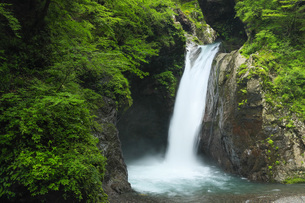 夏の大釜の滝 徳島県の写真素材 [FYI04621518]