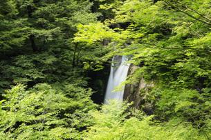 夏の大釜の滝 徳島県の写真素材 [FYI04621519]