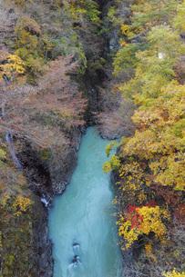 秋の吾妻渓谷 群馬県の写真素材 [FYI04621537]