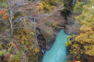 秋の吾妻渓谷 群馬県の写真素材 [FYI04621538]