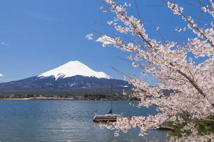 富士山と河口湖の桜の写真素材 [FYI04621544]